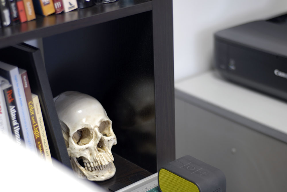 Resin human skull on a bookshelf